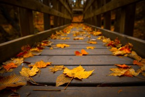nature-landscapes_other_autumn-leaves_12593