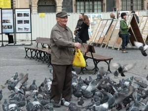 oldmanpigeons
