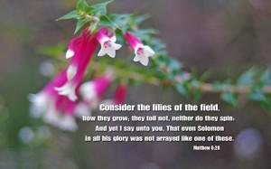 Matthew-6-28