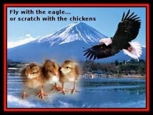 eagle-chicken